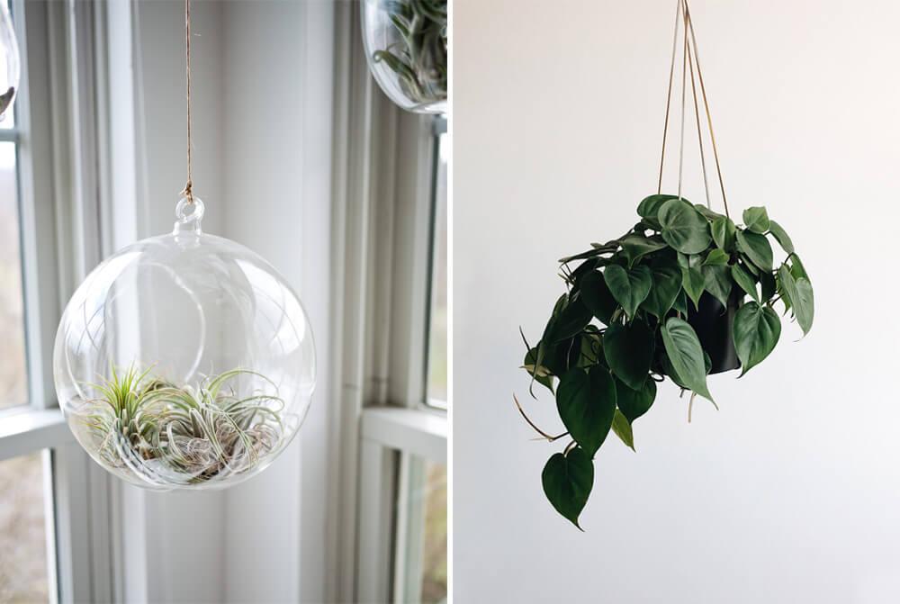 Tom Howley Indoor Plants